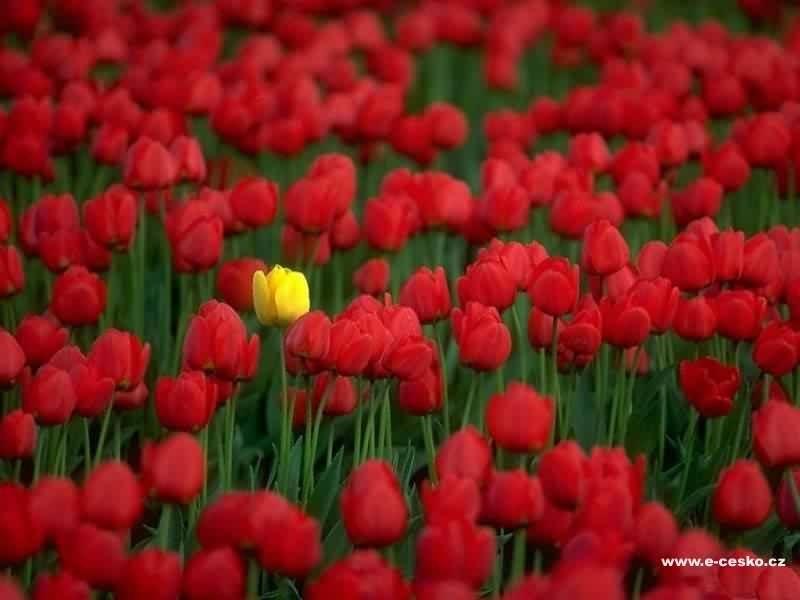 fleurs_2005_0800