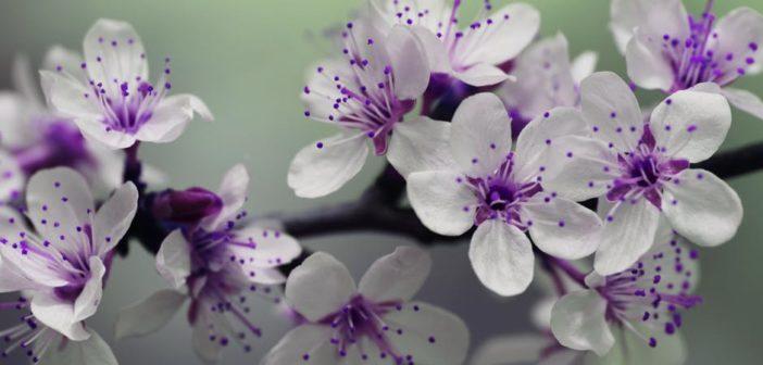 Vivre avec une personne difficile (4): comment pardonner?